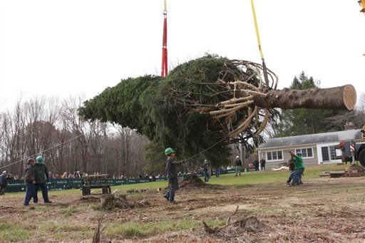 In this photo released by Rubenstein Communications, a 76 foot tall Norway spruce tree, which was chosen as the 2009 Rockefeller Center Christmas tree, is lifted to a trailer in Easton, Conn. Wednesday Nov. 11, 2009.