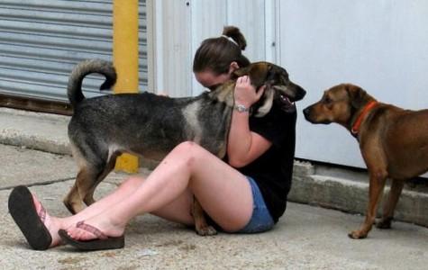Column:Respect animal welfare