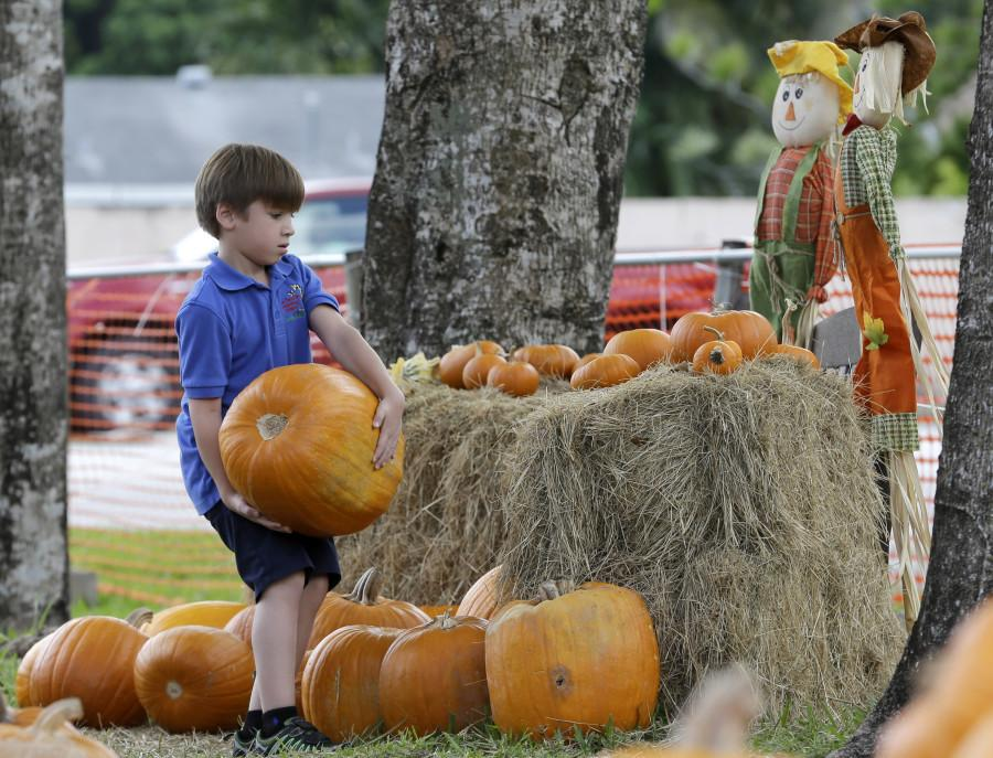 Families prepare to pick their pumpkins for the upcoming Halloween holiday. (AP Photo/Alan Diaz)