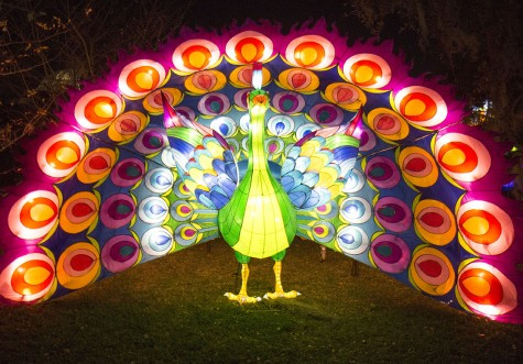 Chinese festival lights up botanical garden