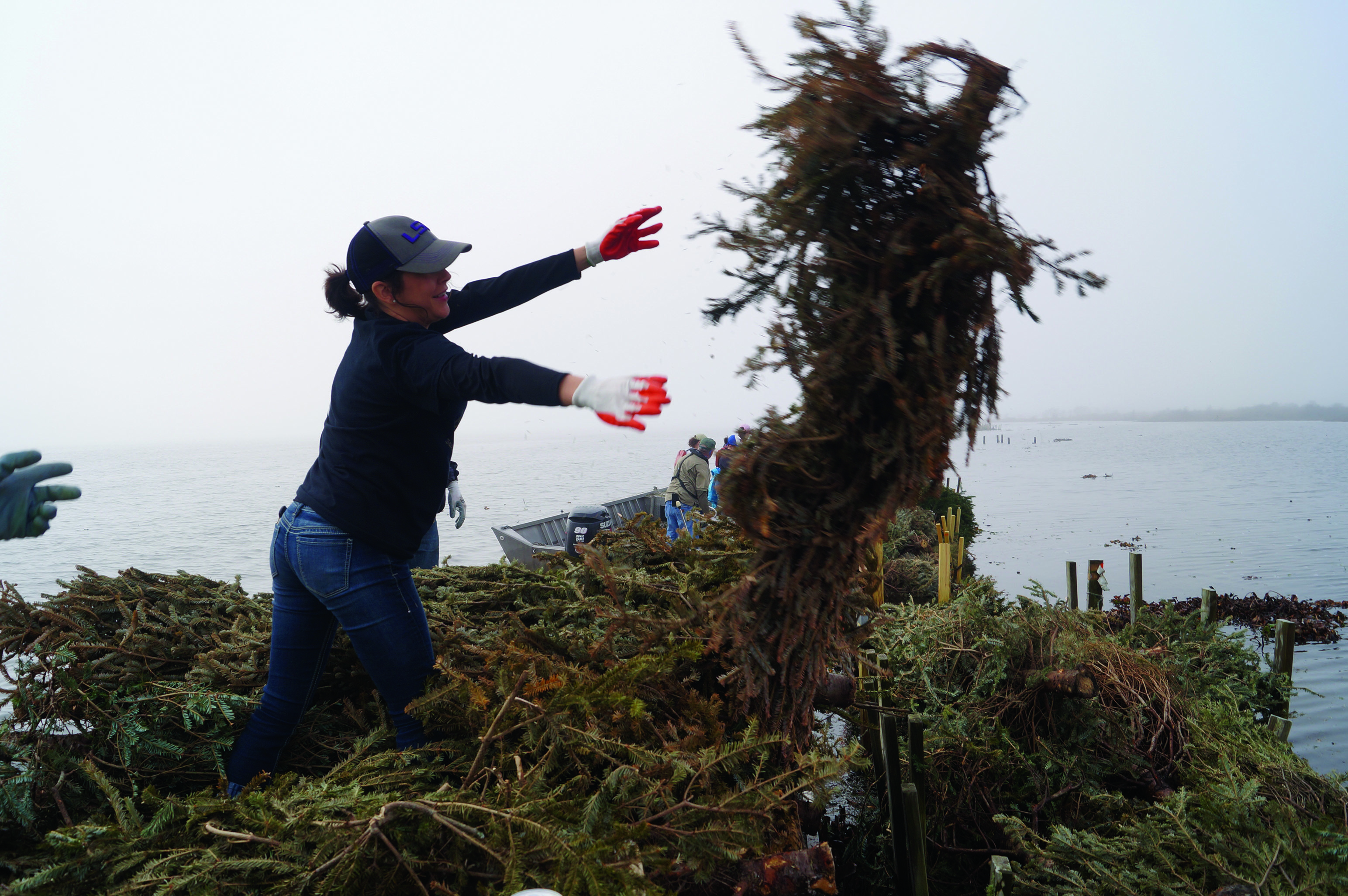 Stephanie Zimmerman, a volunteer with the coastal restoration project, throws a Christmas tree into a