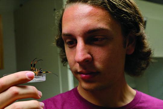 Loyola senior receives full scholarship to Cambridge University to study spiders
