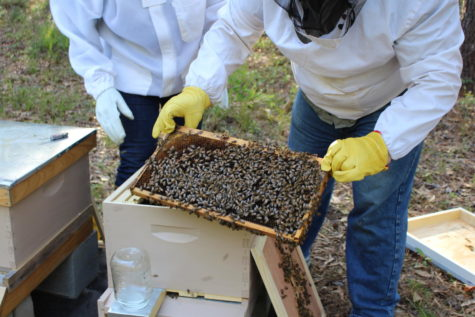 One species of bees was added to the endangered species list