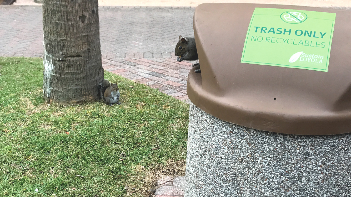 Opinion: Let's talk about our squirrels