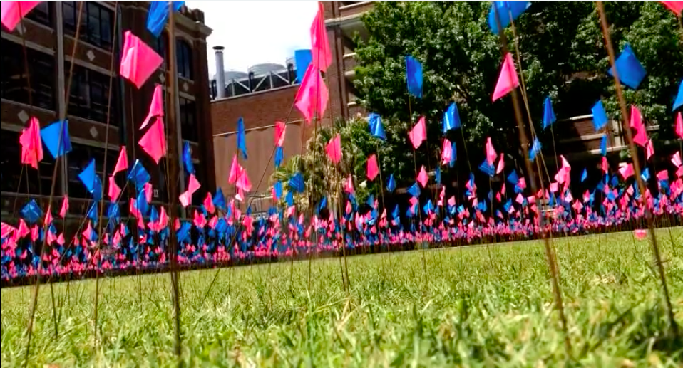 2,000 pink and blue flags wave in the Peace Quad as part of Wolf Pack for Life's April 23 display to spread awareness of the number of abortions carried out each day in the U.S. Photo credit: Anna Knapp