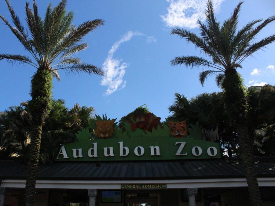 Audubon Zoo elephants