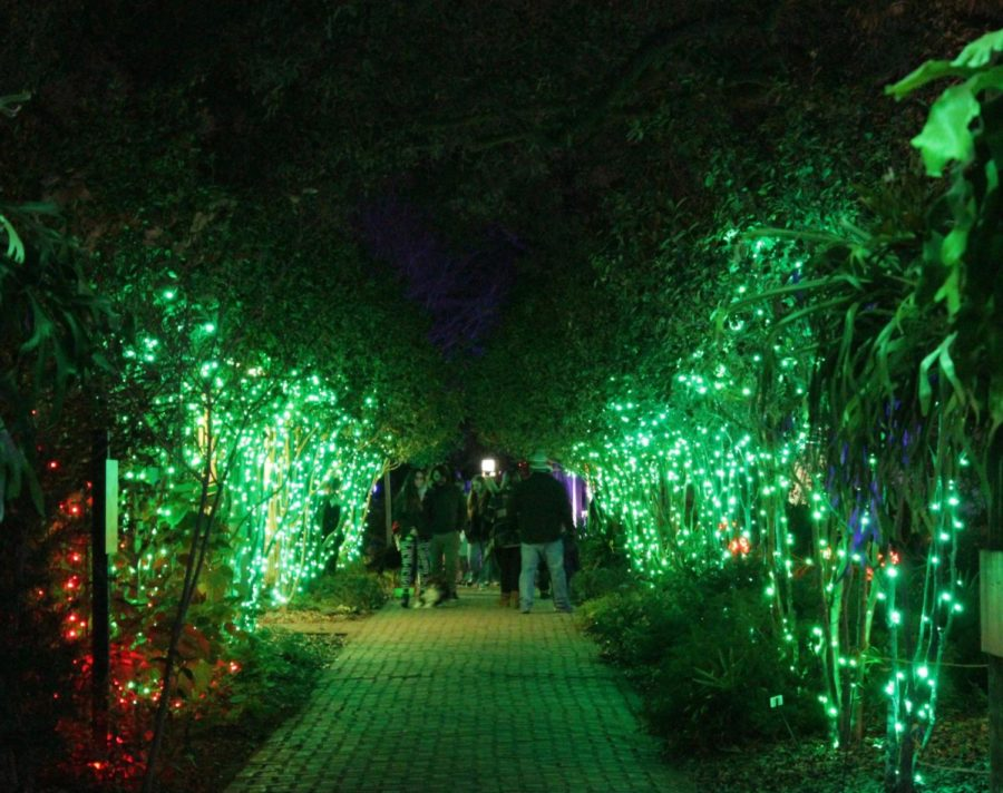 Trees+boast+their+green+lights+as+families+navigate+through+the+paths+of+Celebration+in+the+Oaks.+Photo+credit%3A+Madison+Mcloughlin