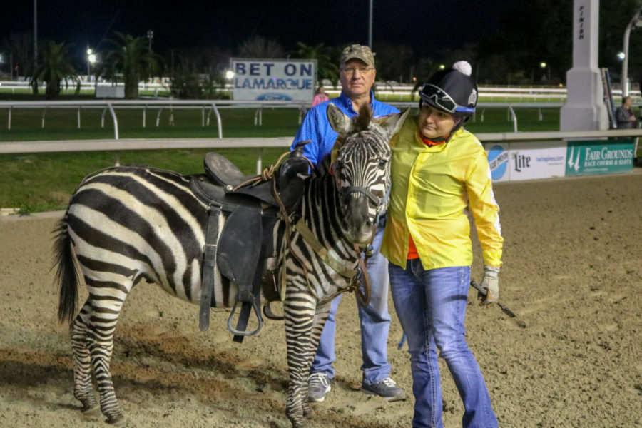 Mandy Green rejoins the TheBlindBandit, the zebra, who had knocked her off in the race. Only one of the four competitors finished the zebra race.
