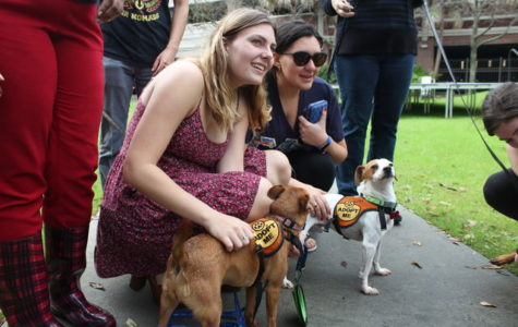 Dogs bring out diversity on campus