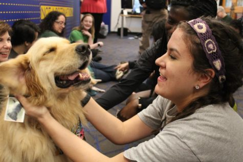 Tallulah, a dog from the Visiting Pet Program, enjoys an ear rub from a Loyola student during her visit to the Student Success Center. Photo credit: Rose Wagner