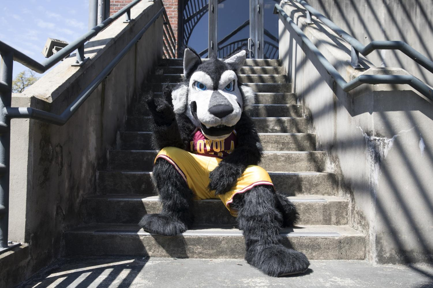 Havoc the Wolf has served as Loyola's mascot since 2006 after a re-branding by the Loyola New Orleans Athletic department. Havoc is present at games held on campus as well as university events. Photo credit: Cristian Orellana