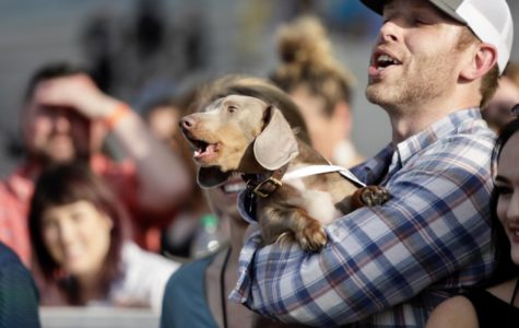 Fast & Furry-ous: Wiener dogs race at the Fair Grounds
