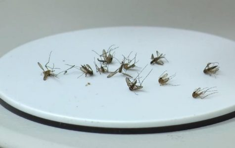 West Nile Virus sparks war against mosquitoes