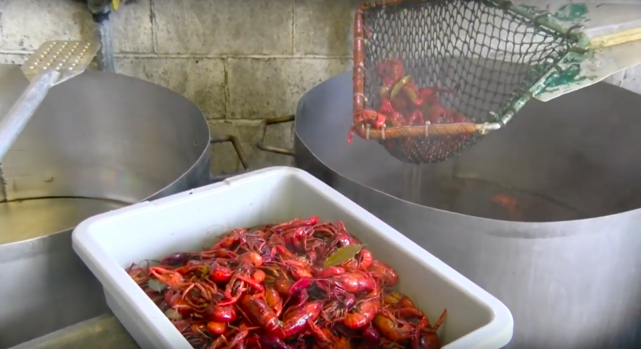 Crawfish+is+transfered+from+a+pot+to+a+tray.