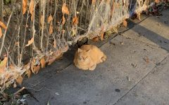 Navigation to Story: Feral cats in New Orleans raise concerns